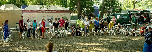 40th Clubshow of the Slovakian Dalmatian Club